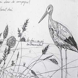 illustration en noir et blanc au crayon du conte le vilain petit canard par Viviane Michel